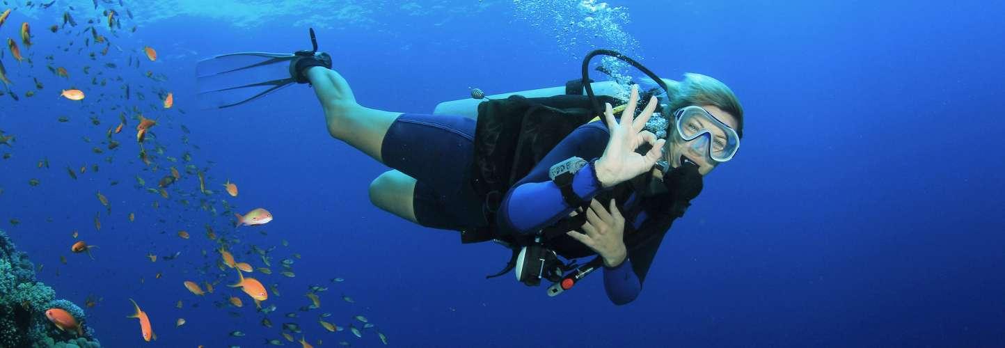 Duikster bij koraalrif